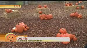 Uesugi Farms Pumpkin Patch by Flower Farm Pumpkin Patch Youtube