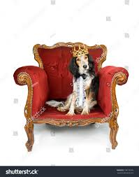 King Dog Sitting His Throne Stock Photo 108118169 - Shutterstock Faux Suede Pet Fniture Covers For Sofas Loveseats And Chairs Comfort Research Big Joe Bagimals Dawson The Dog Bean Bag Armchair Shih Tzu Lap On The Stock Photo Image 350298 Dog Cat Chamomile Amazoncom Sure Fit Quilted Throw Sofa Slipcover Taupe King Sitting His Throne 1018169 Shutterstock Antique Asian Chair Chinese Export Wood Carved Dragon Lion Foo Me My Dogcat Fold Out Bed With Protector Available In Dogs Amazoncouk Boxer Destroyed A Leather Armchair Alone At Home Damaged Hound Buttonback Occasional Loaf
