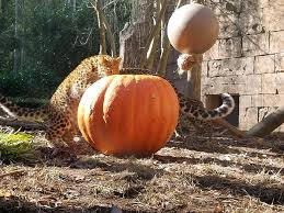 Closest Pumpkin Patch To Marietta Ga by Beechwood Farms Specialty Grocery Store Marietta South