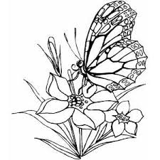 Free Coloring Pages Adults On Animal