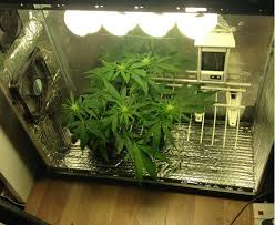 Pot Plants For The Bathroom by Worldwide Indoor Marijuana Grow Guide The Best And Easy Way