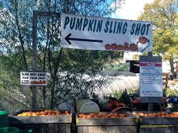 Pumpkin Picking Nj by New Jersey U2013 Caitlin Kenney Smith
