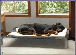 Coolaroo Dog Bed Large by Coolaroo Dog Bed Large Bedroom Home Design Ideas Nx9xblgjzo