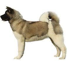 akita dog breed information dogspot in