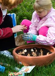 how to plant bulbs in the garden or in containers