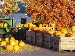 Pumpkin Picking Nj Near Staten Island by Best 25 Apple Picking Long Island Ideas On Pinterest When To