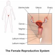 Uterine Lining Shedding Meaning by Black Period Blood And Discharge Before After And At The