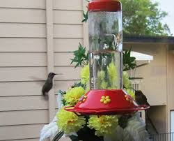 An Introduction To Hummingbirds » Bird Watcher's Digest The Joy Of Bird Feeding Essential Guide To Attracting And Birders Break Records For Great Backyard Count Michigan Radio New Guides Backyard Birding Add Birders Joyment Aerial Birds Socks Absolute Birding Co East Petersburg Shopping Authentic Common Redpoll Photosgreat South 100 Watcher Attract To Your Best 25 Watching Ideas On Pinterest Pretty Birds In Burlington Vermont Photos In Winter Get Ready For Photo 20 Best Birdfeeders Images Feeding Station
