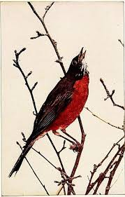 Robin In Leafless Branches