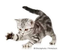cat sofa cat scratching tips tricks for saving your sofa