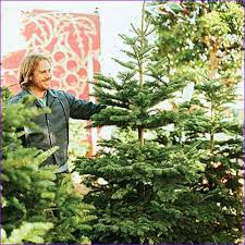 Best Kinds Of Christmas Trees by Images Of Live Christmas Tree Types Halloween Ideas