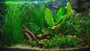 donne poissons et aquariums animaux gratuit à donner