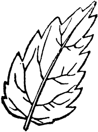 Leaf outline fall leaves clipart 2