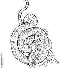 Boa Snake Coloring Page