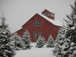 Christmas ~ Jones Family Farm Christmas Trees Best Tree Images On ... Weekend Getaway Guide Wooster And Wayne County Ohio Girl Pottery Barns Holiday Dcor Driven By Decor 101_0639jpg The Pine Tree Barn Flushing Mi Image Mag Barred Owl On Top Of A Pine Tree Wallpaper Animal Wallpapers Ol Dairy Christmas Farm Trees Old In Sunnyside Georgia 20 Small Towns You Should Be Spending Time This Fall Jones Family Best Images On Find The Perfect At Evans Whispering Pines Faux Lit Basket Au Willamsburg Festival Shreve Been There