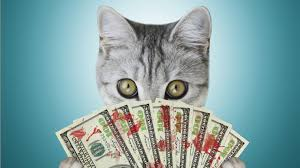 cost to declaw cat declawing is for veterinarians but bad for cats