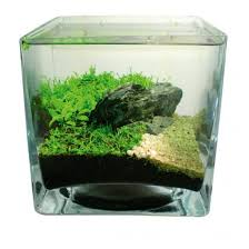 how to aquascape small tanks practical fishkeeping magazine
