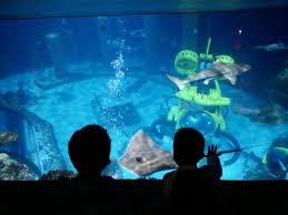 legoland sea aquarium picture of legoland california carlsbad