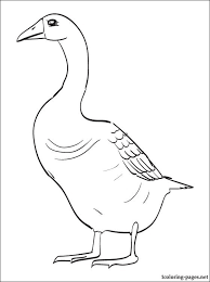 Goose Printable Coloring Page
