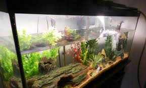 Extra Large Aquarium Decorations by How To Change The Water In Your Freshwater Aquarium The Easy Way