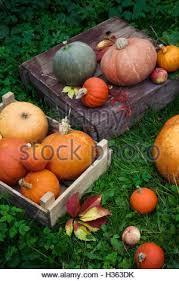 Varieties Of Pumpkins by Varieties Of Squash Pumpkin And Gourd Cucurbita Pepo And
