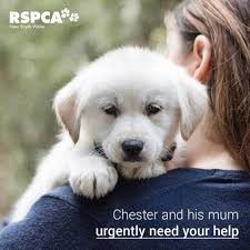 RSPCA Dubbo Adoptions & Foster Care - Home | Facebook Petbarn Rspca Nsw The Dog Barn Grooming St Helens Supplies Food 100 You U0026 Me Flat Roof Kennel Brown Large Edge And Create Campaign To Raise 500k For Seeing Eye Yard Bar Animates Pet Shop Warehouse Puppy Salt Sky Utah Wood Dish Holder Reclaimed Barn Beam 2 Bowl Medium 7000 Shops Stores 640 Gympie Rd Lawnton Dog Door Barn Pipethis Is Photo Of 3 For The Dog Door Bernies Home Facebook