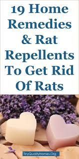 Best 25+ Getting Rid Of Rats Ideas On Pinterest | Getting Rid Of ... Details Amazoncom Bonazza Mice Repellent Plugin Ultrasonic Pest The Battle Of And Men Pparedness Pro How To Get Rid Of Permanently Without Professional Help Youtube Control 1 Resource For Horse Farms Stables Riding Rats In Your Barns Stall13com Videos To Naturally Natural Rat Guide 5 Easy Steps Helpful Hints Pinterest Chicken Chick 15 Tips Rodents Around Coops Just One Bite Ii Bars And Killer8lbs8 16 Oz Bars Pet Coats Hairless Rex Harley Uerstanding Fancy Keep Other Out Your Car Engine
