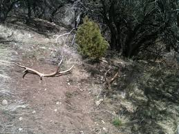 southern utah hunt and fish shed hunting contest update
