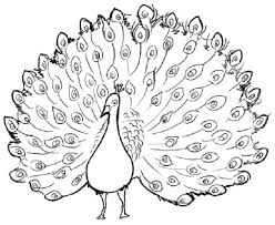Pretty Peacock Coloring Page Printable