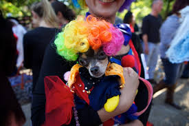 Tompkins Square Park Halloween Dog Parade 2016 by Photos The Best Costumes From Tompkins Square Halloween Dog