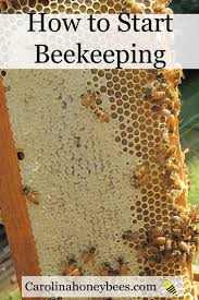 78 Best Bees Images On Pinterest | Bees Knees, Honey Bees And Bee ... How To Keep Bees A Beginners Guide Bkeeping Deter And Wasps And Identify Which Is Family 2367 Best Homestead Animals Images On Pinterest Poultry Raising Best Bee Hives Images Photo Wonderful To Away Become A Backyard Bkeeper Fixcom Why Your Child Needs Working Bee Urban Honey Back Yard Made Simple Image On Marvellous 301 Keeping Bees 794 The Complete 7step Chickens In Plants That Simplemost