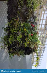 100 Images Of Hanging Gardens In Perez Art Museum Editorial Photography