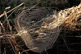 toile d araignée wikipédia