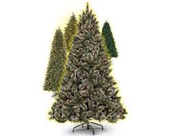 Christmas Tree Types Canada by Sears Canada Christmas Trees Rainforest Islands Ferry