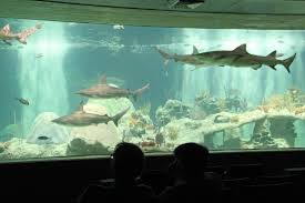 Odysea Aquarium Scottsdale: Tips, Tickets, Location Free Novolog Flexpen Coupon Spell Beauty Discount Code Seaquest Aquarium Escape Room Olive Branch One A Day Menopause Inn Shop Squaw Valley Promo Coach Bags Uk Odysea Aquarium Local Coupons October 2019 Digital Coupons Dillons Acurite Codes Jeans Wordans Ourbus March Dcg Stores Fniture