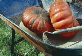 Types Of Pumpkins For Baking by Heirloom Pumpkin Varieties And Other Squash Organic Gardening