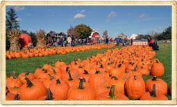 Pumpkin Farm Illinois Best by Goebbert U0027s Farm And Garden Center Of South Barrington