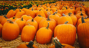 Motley Pumpkin Patch by Tampa Bay Pumpkin Patches And Events U2013 Prepare To Carve The