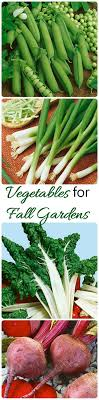 Fall Ve able Garden Planning Choosing The Best Plants For Autumn