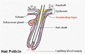 excessive hair shedding causes dandruff and hair loss is there a link hold the hairline