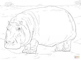 Hippopotamus For Coloring Page