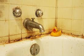 schimmel im bad so entfernen sie ihn richtig