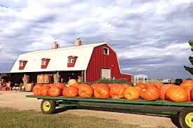 Real Pumpkin Patch Dfw by 10 Texas Pumpkin Patches That Are Worth The Trip