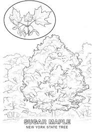 Click To See Printable Version Of New York State Tree Coloring Page