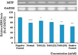 si鑒e de pellet inhibitory effects of taraxacum mongolicum with phreatic water on