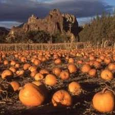 Pumpkin Patch Medford Oregon by Some Of The Nation U0027s Best Pumpkin Patches Dave U0027s Garden