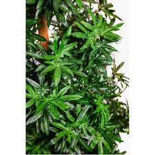 Walmart Weed Marijuana Leaf Christmas Tree