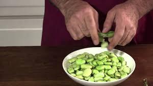 comment cuisiner les f es fraiches gourmet végétarien comment préparer des fèves fraîches