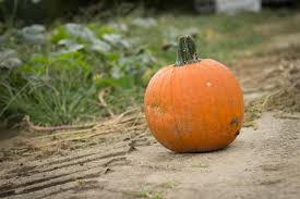 Piedmont Service Center Pumpkin Patch by Specialty Crops Central Virginia Ag Spotlight