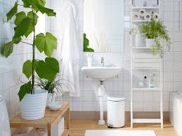 Best Plant For Bathroom by Bathroom Keeping House Plants In The Bathroom Plants For